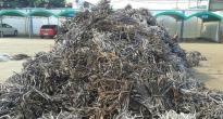 高价回收废铅